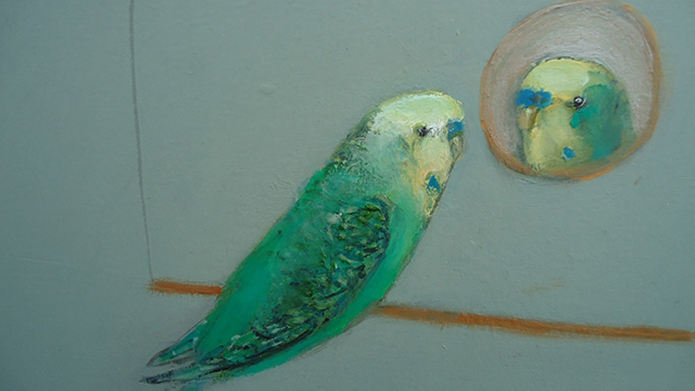 Budgie, mirror mirror on the wall.....